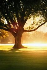 iPhone обои Солнечный свет, деревья, тень, парк, город