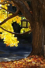 Tree, bench, autumn, leaves, sunlight