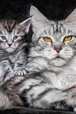 Preview iPhone wallpaper Yellow eyes cat, blue eyes kitten