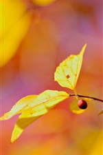 Preview iPhone wallpaper Yellow leaves, red berry