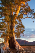 Preview iPhone wallpaper Australia, nature scenery, tree, mountain, evening