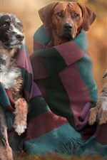 Preview iPhone wallpaper Autumn, dogs, family
