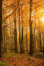 Preview iPhone wallpaper Autumn, forest, nature, trees, branches, sunlight