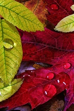 Autumn, green yellow leaves, water drops