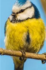 iPhone fondos de pantalla Pájaro, amarillo pluma azul, rama, tronco