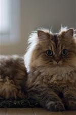 Preview iPhone wallpaper Cat, house, floor