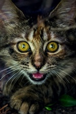 Preview iPhone wallpaper Cute kitten face, yellow eyes