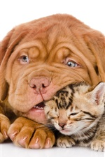 Preview iPhone wallpaper Dog with cat, bulldog, kitten