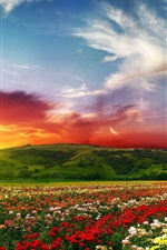 Preview iPhone wallpaper Flowers, roses, fields, nature, sky, clouds, sunset