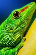 Preview iPhone wallpaper Green lizard, yellow branches, bokeh