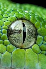 Green python eye