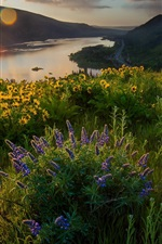 Preview iPhone wallpaper Morning light, flowers, river, nature landscape