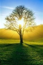 Preview iPhone wallpaper Nature, fields, tree, sun light, summer