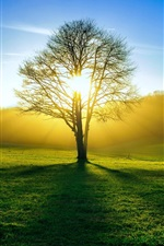 iPhone обои Природа, поля, дерево, солнце свет, лето