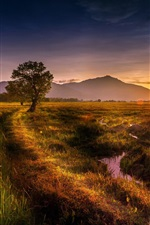 Nature landscape, fields, tree, sunset, summer
