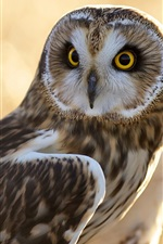 Preview iPhone wallpaper Owl, bird, glare