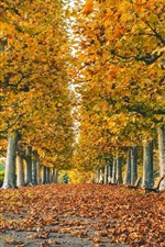 Park, road, leaves, trees, grass, autumn