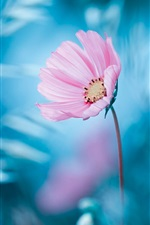 Preview iPhone wallpaper Pink flower, blue background, bokeh