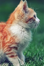 Preview iPhone wallpaper Red kitten side view, grass