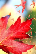 Preview iPhone wallpaper Red maple leaves, birds, art