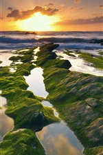 Preview iPhone wallpaper Spain, coast, sea, moss, sunrise