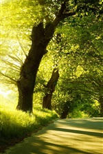 Preview iPhone wallpaper Sunrise, spring, forest, trees, road