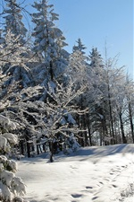 Preview iPhone wallpaper Thick snow winter, trees, spruce