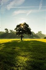 미리보기 iPhone 배경 화면 나무, 공원, 잔디, 녹색, 하늘, 구름, 햇빛