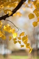 Preview iPhone wallpaper Trees, yellow leaves, autumn, blur, nature