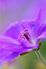 Preview iPhone wallpaper Violet, flower, petals, macro, bokeh