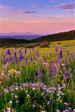 Preview iPhone wallpaper White River Plateau, Colorado, flowers, meadow