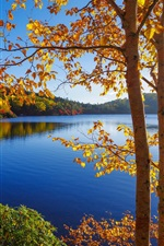 Autumn, lake, trees, forest, sky