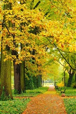 Autumn, park, trees, yellow leaves, paths, benches
