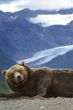 Preview iPhone wallpaper Bear, grizzly, mountains, Alaska
