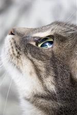 Preview iPhone wallpaper Cat focus