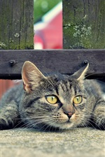미리보기 iPhone 배경 화면 울타리 아래 고양이