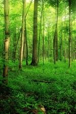 Forest, summer, trees, green, sunlight