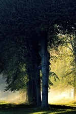 Preview iPhone wallpaper Forest, trees, morning, sunlight, fog, autumn