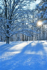 Forest, trees, winter, snow, sun