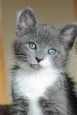 Preview iPhone wallpaper Gray cat, black cat