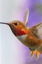 Preview iPhone wallpaper Hummingbird flying, wings, flowers