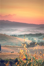 Preview iPhone wallpaper Italy, Tuscany, hills, trees, fields, grass, morning, fog