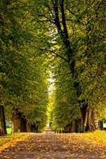 Preview iPhone wallpaper Leaves, forest, trees, park, grass, road, autumn