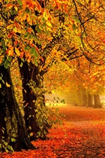 Preview iPhone wallpaper Nature autumn, forest, park, trees, leaves, colorful, road