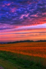 Preview iPhone wallpaper Nature landscape, sunset, road, fields, trees