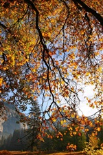 Preview iPhone wallpaper Nature scenery, autumn, tree, branches, leaves, sunlight