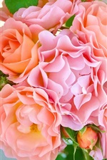 Preview iPhone wallpaper Pink rose flowers, petals, buds