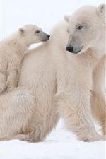 iPhone обои Белые медведи, снег, белый