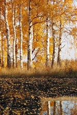 Preview iPhone wallpaper Road, birch, autumn, nature scenery