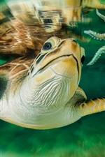 Preview iPhone wallpaper Sea, turtle, Australia, underwater world